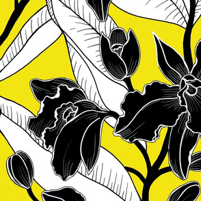 Black and white yellow-2 orchid 2020