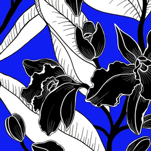 black and white royal orchid 2020