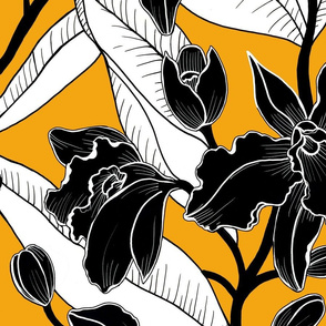 Black and white mustard orchid 2020
