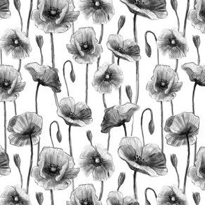 Vintage simple poppy flowers pencil sketch black and white