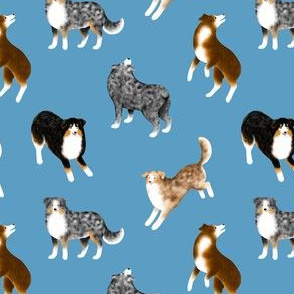 Australian Shepherds (Blue Background) – Small Scale