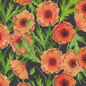 Pink Poppies on Grey