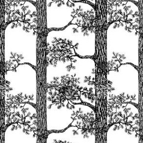 Pine Forest (Black and White) – Small Scale