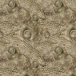 Ordovician Fossils – Small Scale