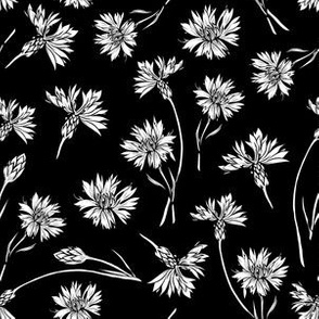 Cornflowers Floral Field on Black