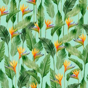 Bird of Paradise Streilitz-Turquoise