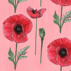 Perfect Poppy