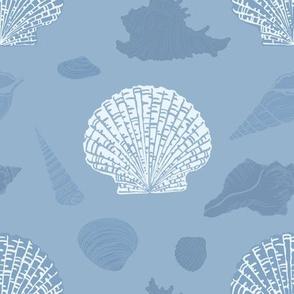 Seashells on light blue