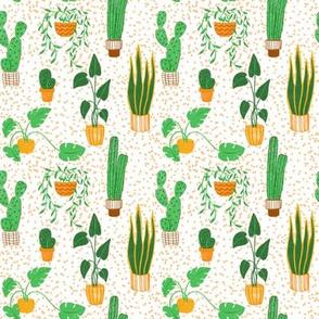House plants cuties