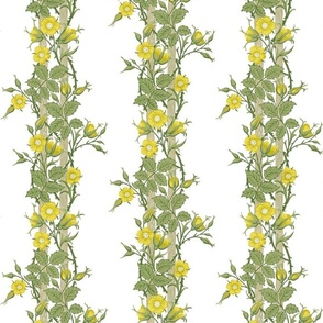 Rambler ~ The William Morris Collection ~ Buttercups on White