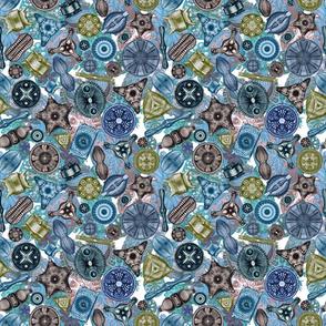 Ernst Haeckel Ocean Diatoms on Ocean Sea Squirts