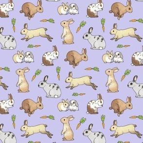 Rabbits on lavender