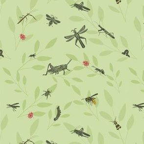 Insects Galore
