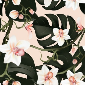 Orchids monstera