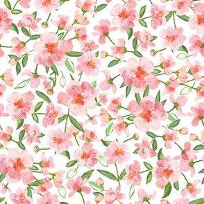 Blush Rose Floral, Small