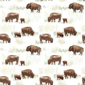 Buffalo Family, Smaller
