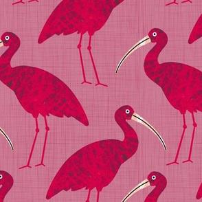 Bird Alphabet - I is for Ibis