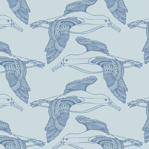 Albatross Blue