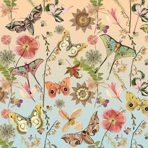 Ombre Moths n Butterflies
