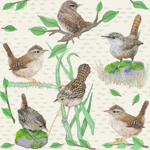Woodland Wrens - Small