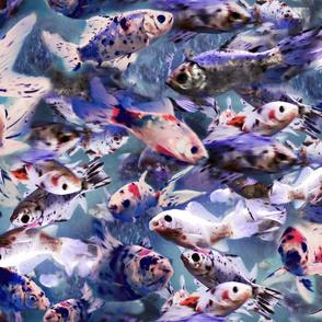 Medium Fish Aquarium