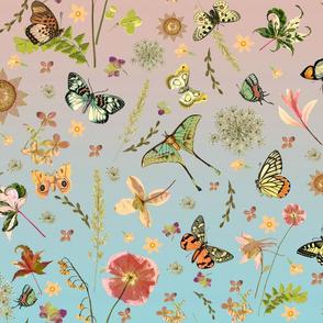 east fork blue butterflies pink blue