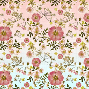 Wild Pink Roses ombre2