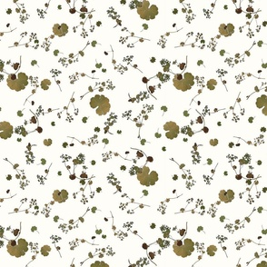 Alchemilla curtain pattern 6