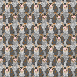 Tricolour Australian cattle dog portrait pack