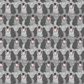 Blue Heeler Australian cattle dog portrait pack