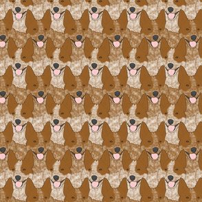 Red Heeler Australian cattle dog portrait pack