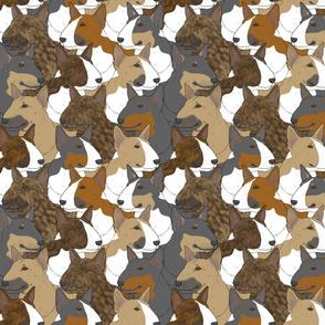 Colored Miniature Bull Terrier portrait pack