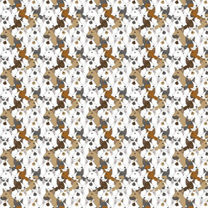Small Miniature Bull Terrier portrait pack