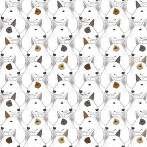 White Miniature Bull Terrier portrait pack
