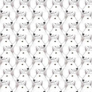 Solid white Miniature Bull Terrier portrait pack