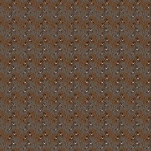 Small Chocolate Labrador Retriever portrait pack