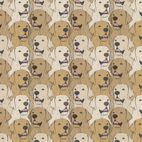 Yellow Labrador Retriever portrait pack
