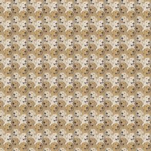 Small Yellow Labrador Retriever portrait pack