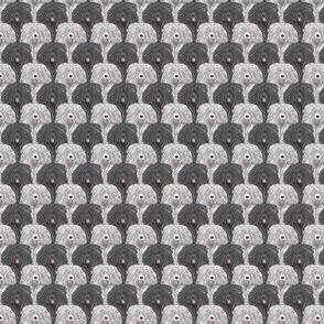 Small White and Black Puli portrait pack