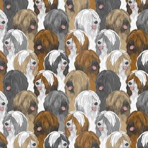 Tibetan terrier portrait pack