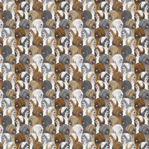 Small Tibetan terrier portrait pack