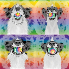 Nosey merle rainbow Flyball Dog faces