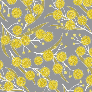 Golden wattle blossoms in yellow and gray