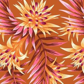 Fasciata Tropical - Orange / Pink