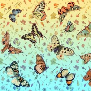 wildflowers w butterflies ombre