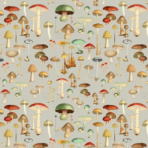 Hike More Mushrooms: Fog