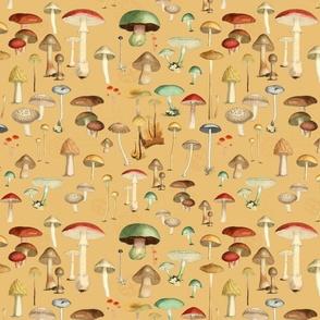 Hike More Mushrooms: Honey