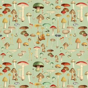 Hike More Mushrooms: Sage