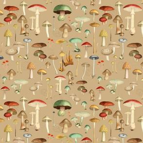 Hike More Mushrooms: Tan