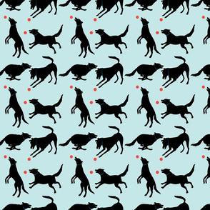 The playful black dog - Blue background